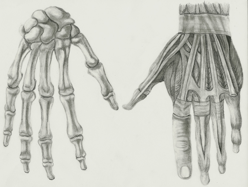 The Anatomy of Hands and Feet Drawings | Dr. Ashley Godbold\'s Blog